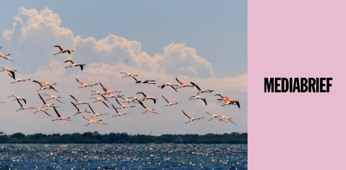 Image-MumbaiWantsPink-Social-activists-artists-protect-Mumbai-wetlands-pink-Flamingos-MediaBrief.jpg