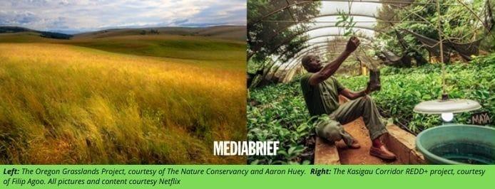 image-Netflix-Net-Nature-plan-for-net-zero-greenhouse-gas-emissions-by-end-2020-mediabrief-2.jpg