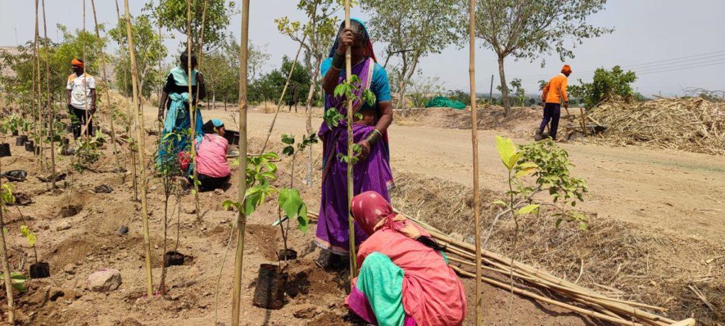 SPN plants 8000 tree saplings in Satara Maharashtra (7).jpeg