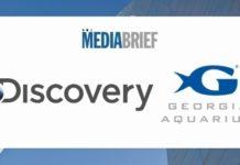 Image-Discovery-Georgia-Aquarium-content-partnership-MediaBrief.jpg