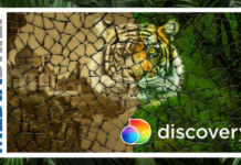 Image-Discovery-India-celebrates-Global-Tiger-Day-MediaBrief.png